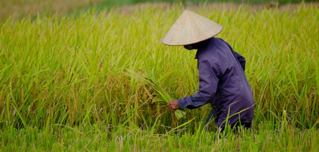 woman-on-rice-farm-by-tyler-ingram-creative-commons